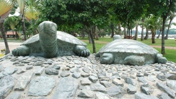kusu island tortoises